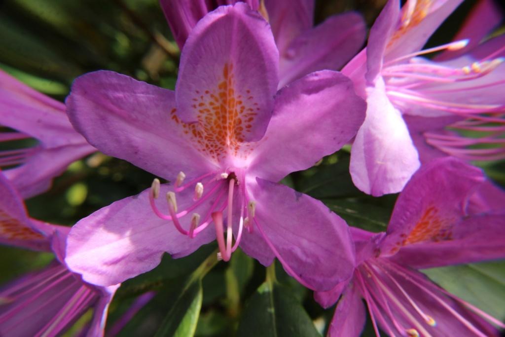 [Fil ouvert] Fleurs et plantes - Page 15 Img_8915