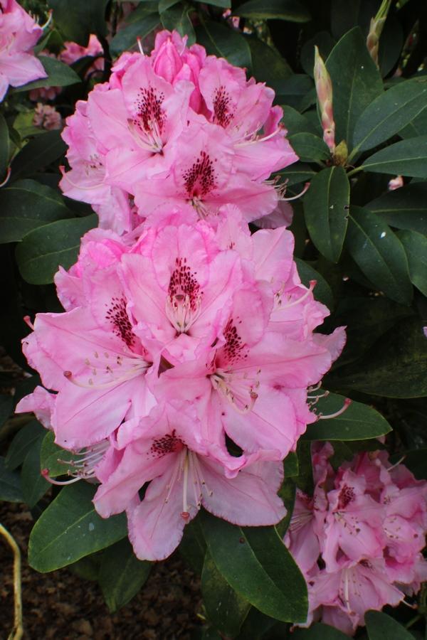 [Fil ouvert] Fleurs et plantes - Page 15 Img_8916