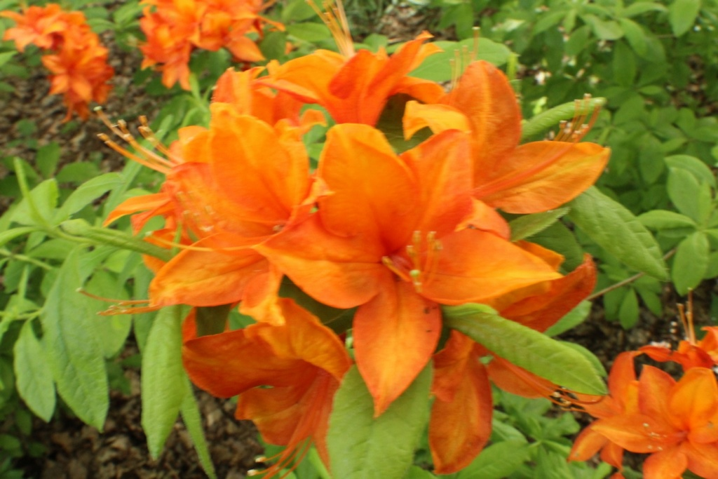 [Fil ouvert] Fleurs et plantes - Page 15 Img_8918