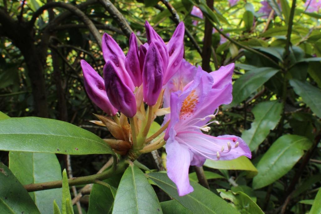 [Fil ouvert] Fleurs et plantes - Page 15 Img_8923