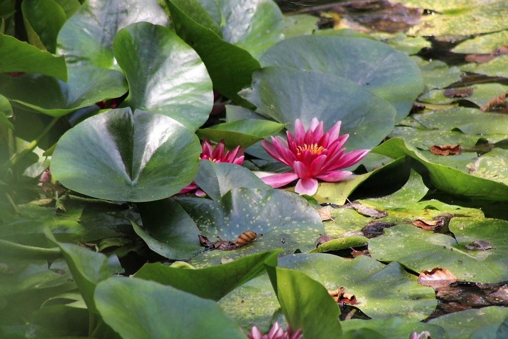 [Fil ouvert] Fleurs et plantes - Page 32 Img_9159