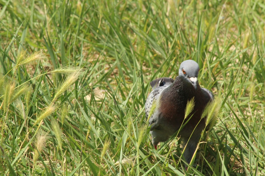 [Ouvert] FIL - Oiseaux. - Page 14 Img_9323