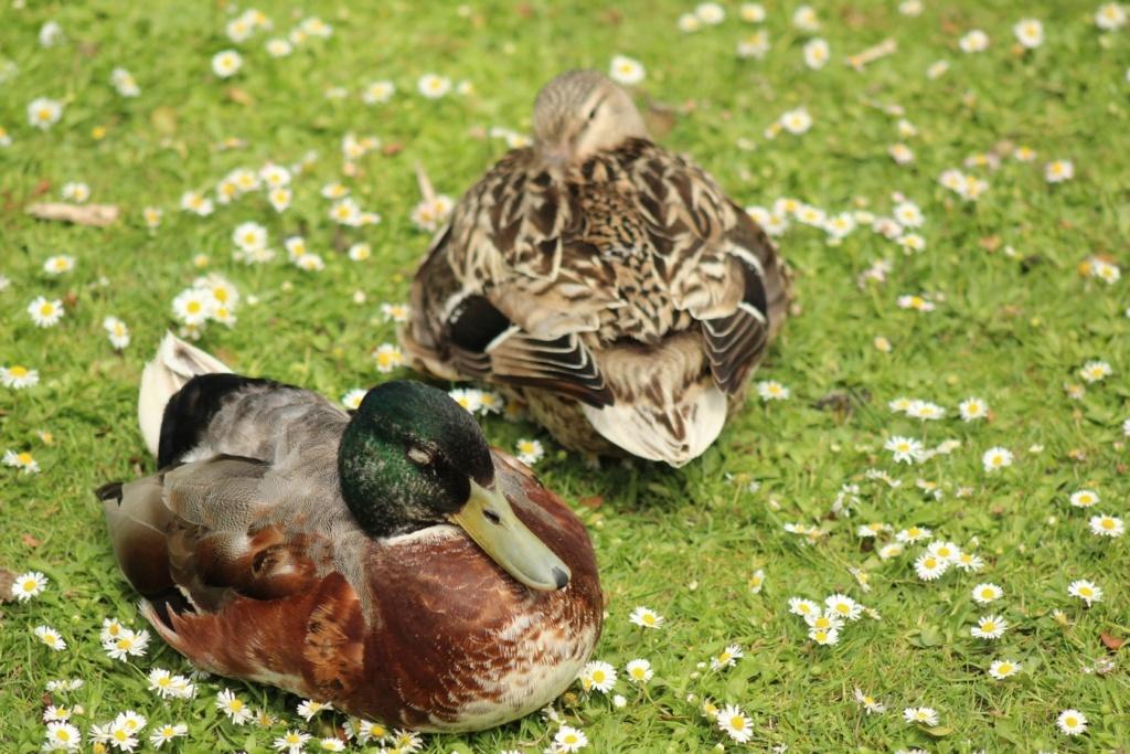 [Ouvert] FIL - Oiseaux. - Page 31 Img_9339