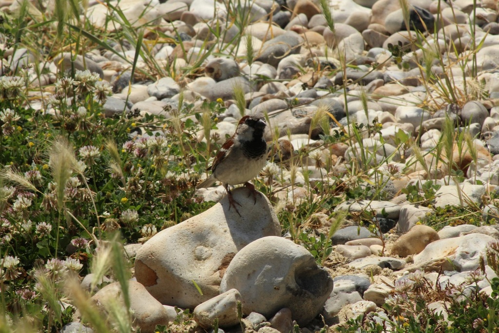 [Ouvert] FIL - Oiseaux. - Page 14 Img_9411