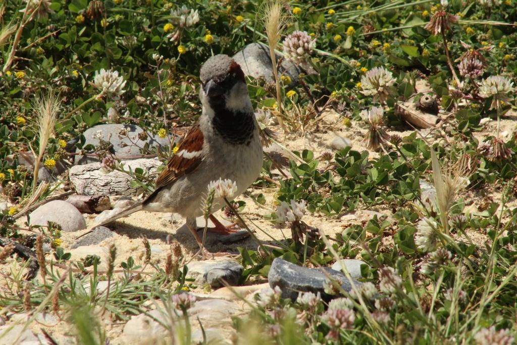 [Ouvert] FIL - Oiseaux. - Page 14 Img_9412
