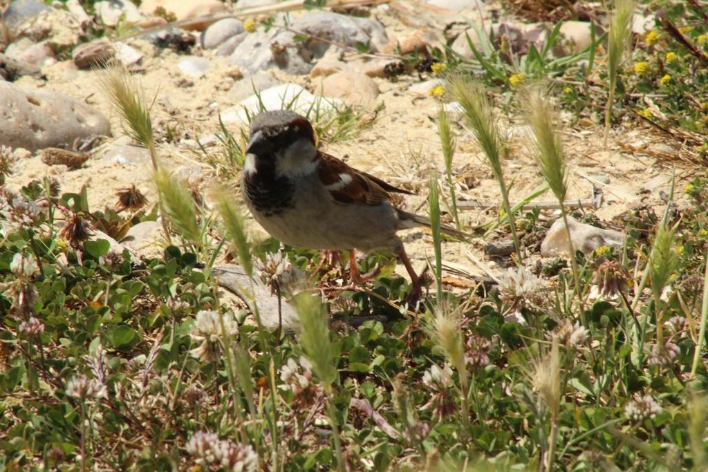 [Ouvert] FIL - Oiseaux. - Page 14 Img_9413