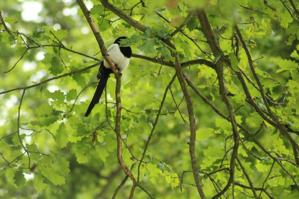[Ouvert] FIL - Oiseaux. - Page 31 Img_9422