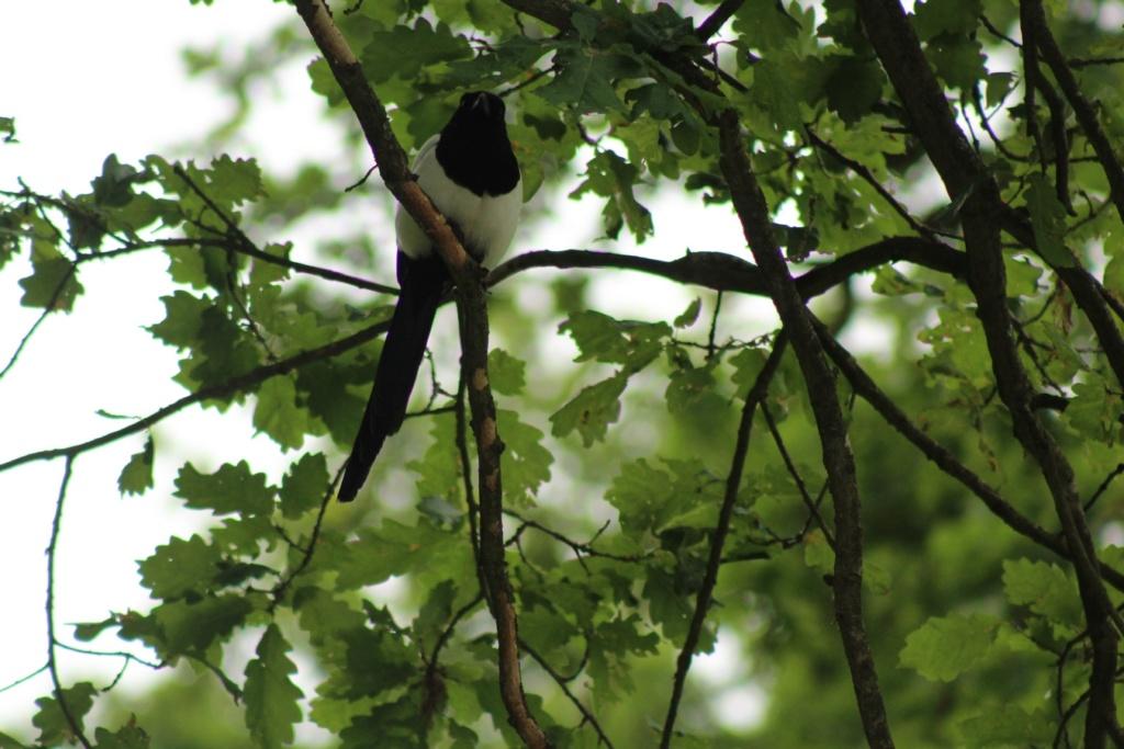 [Ouvert] FIL - Oiseaux. - Page 31 Img_9423