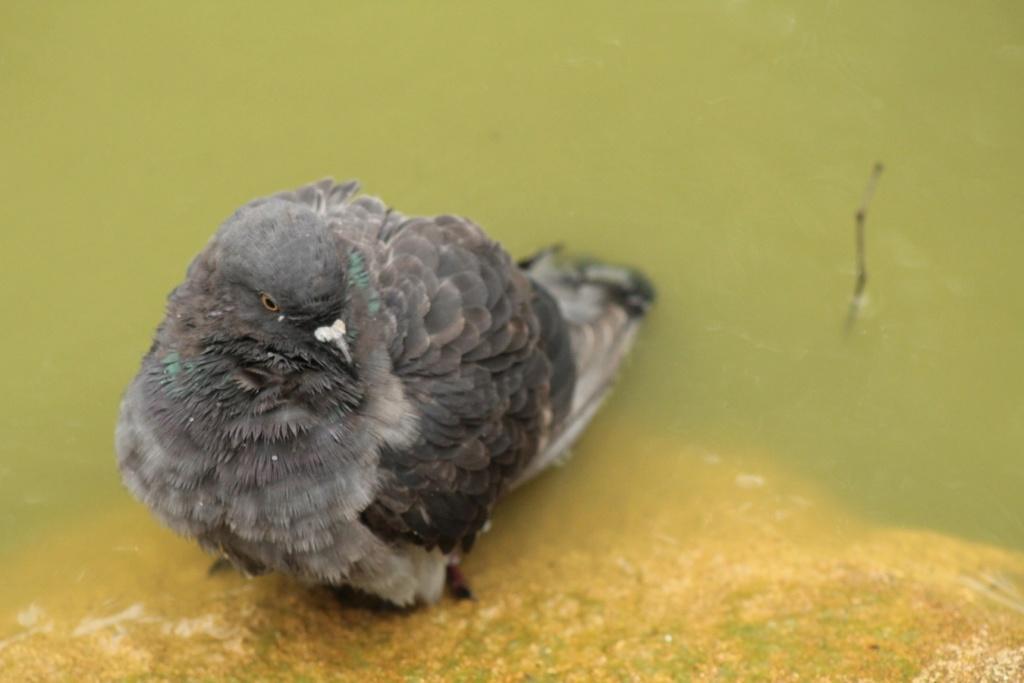 [Ouvert] FIL - Oiseaux. - Page 31 Img_9424