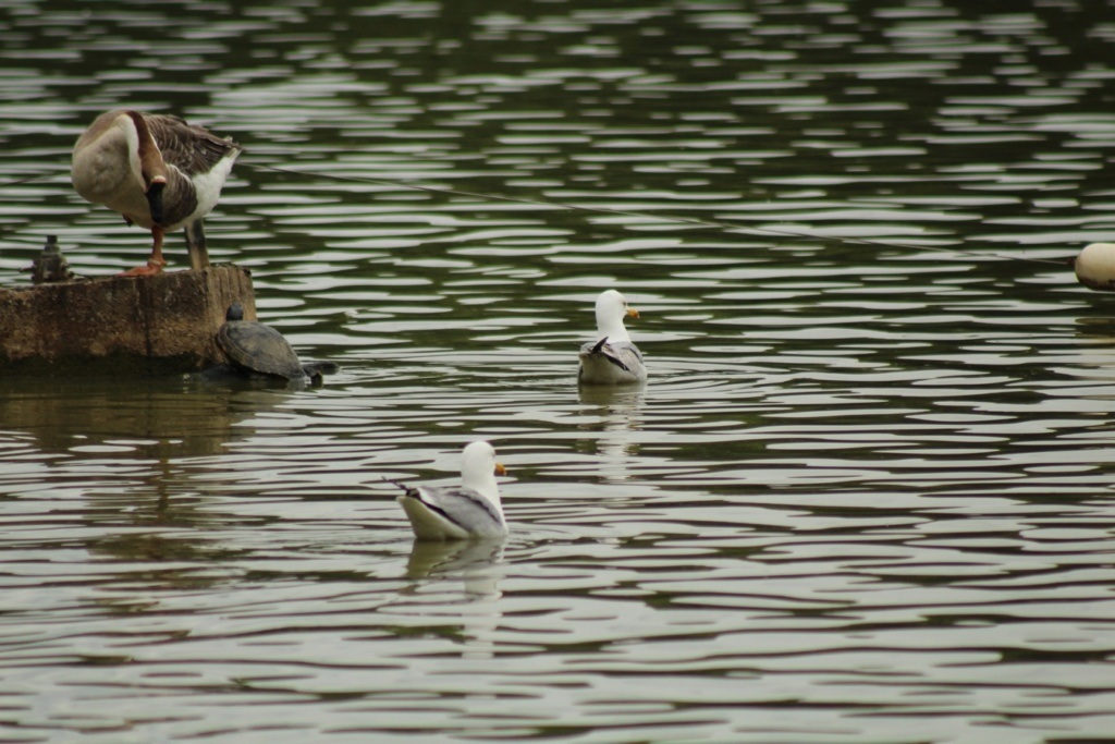 [Ouvert] FIL - Oiseaux. - Page 31 Img_9425