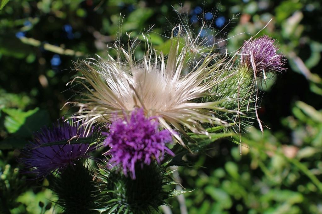 [Fil ouvert] Fleurs et plantes - Page 32 Img_9546