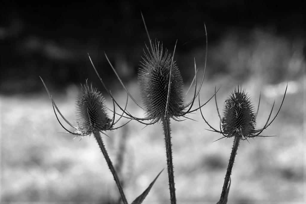 [Fil ouvert] Fleurs et plantes - Page 32 Img_9550