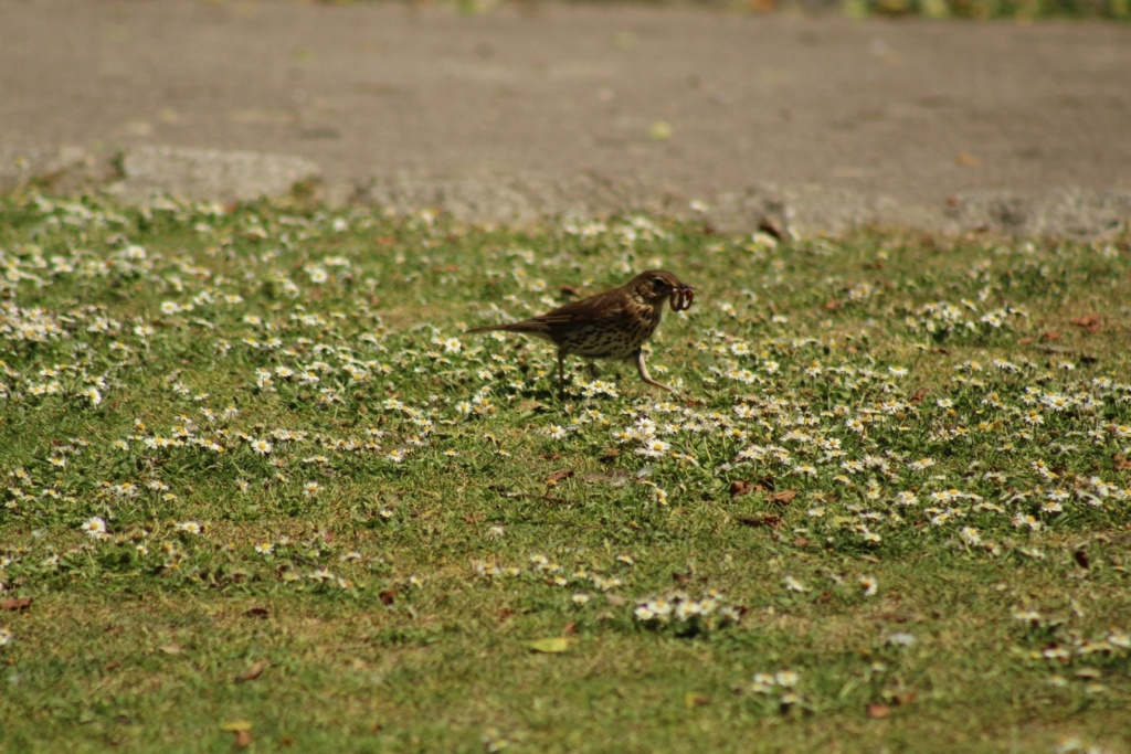 [Ouvert] FIL - Oiseaux. - Page 31 Img_9623