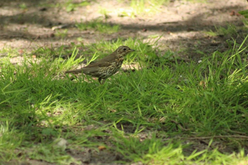 [Ouvert] FIL - Oiseaux. - Page 31 Img_9717