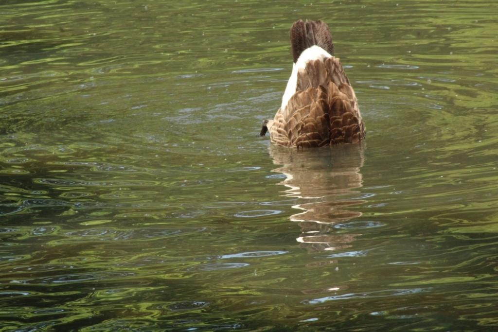 [Ouvert] FIL - Oiseaux. - Page 31 Img_9725