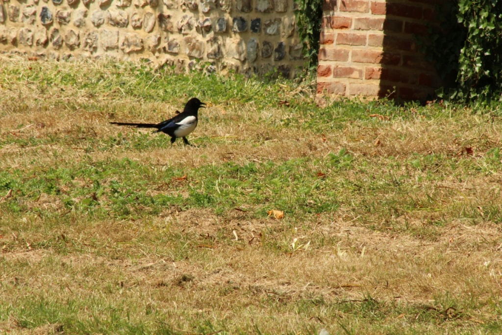[Ouvert] FIL - Oiseaux. - Page 31 Img_9726