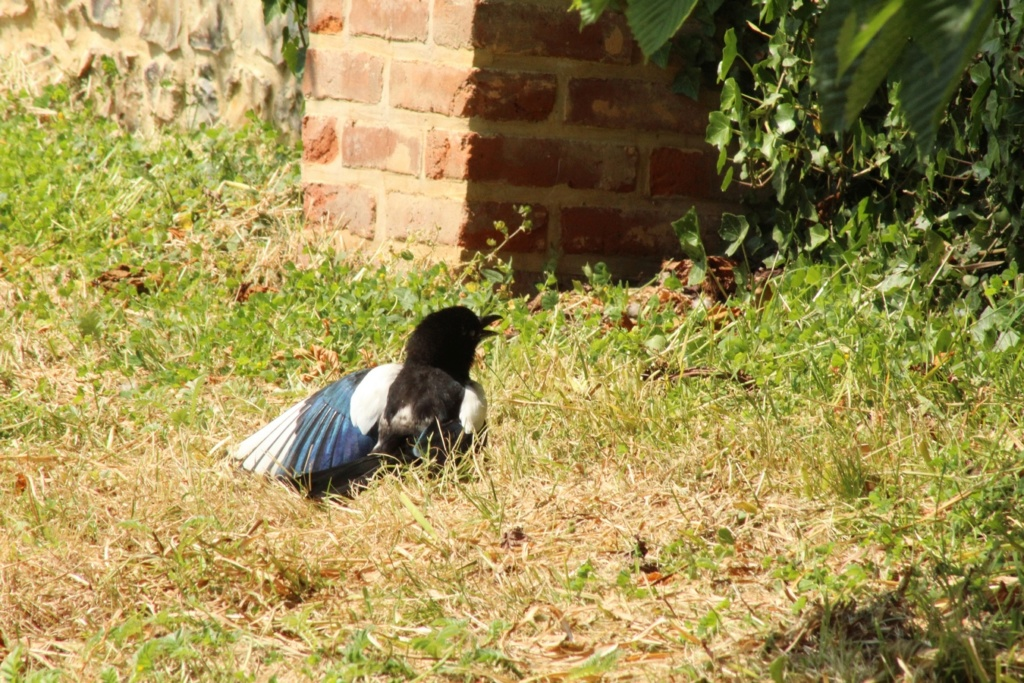 [Ouvert] FIL - Oiseaux. - Page 31 Img_9727