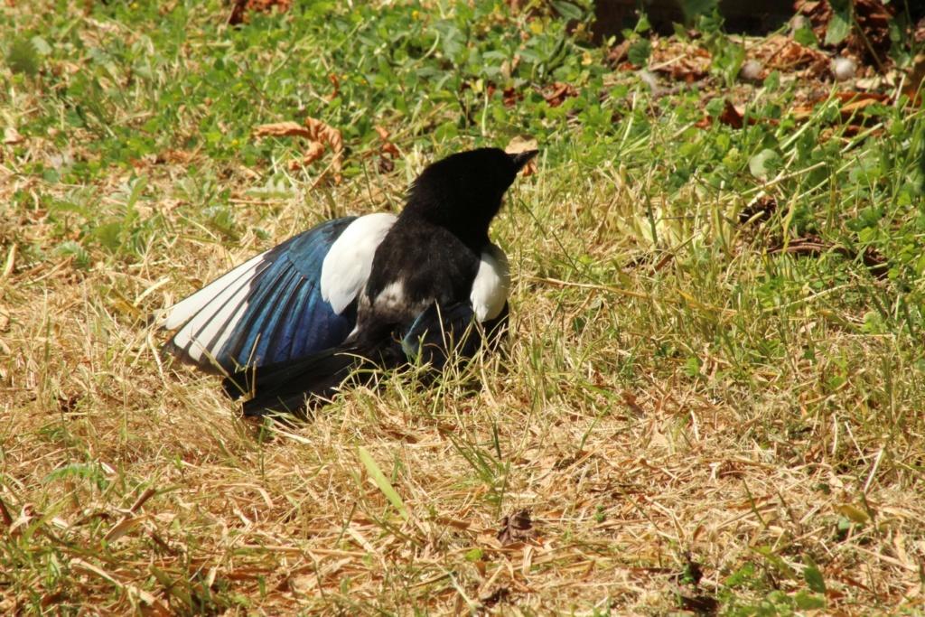 [Ouvert] FIL - Oiseaux. - Page 31 Img_9728