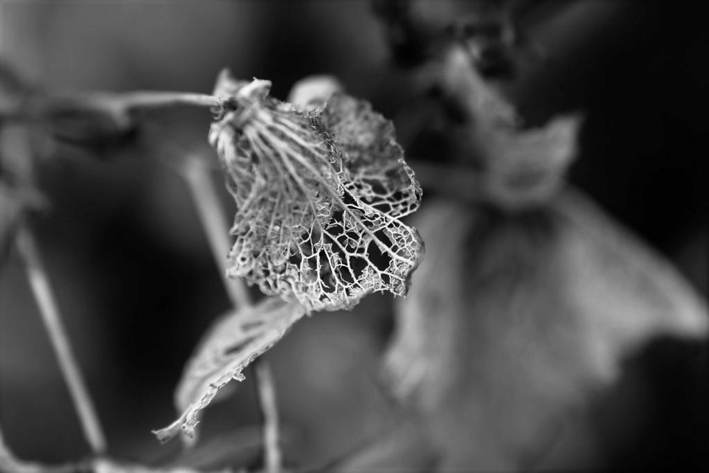 [Fil ouvert] Fleurs et plantes - Page 32 Img_9749