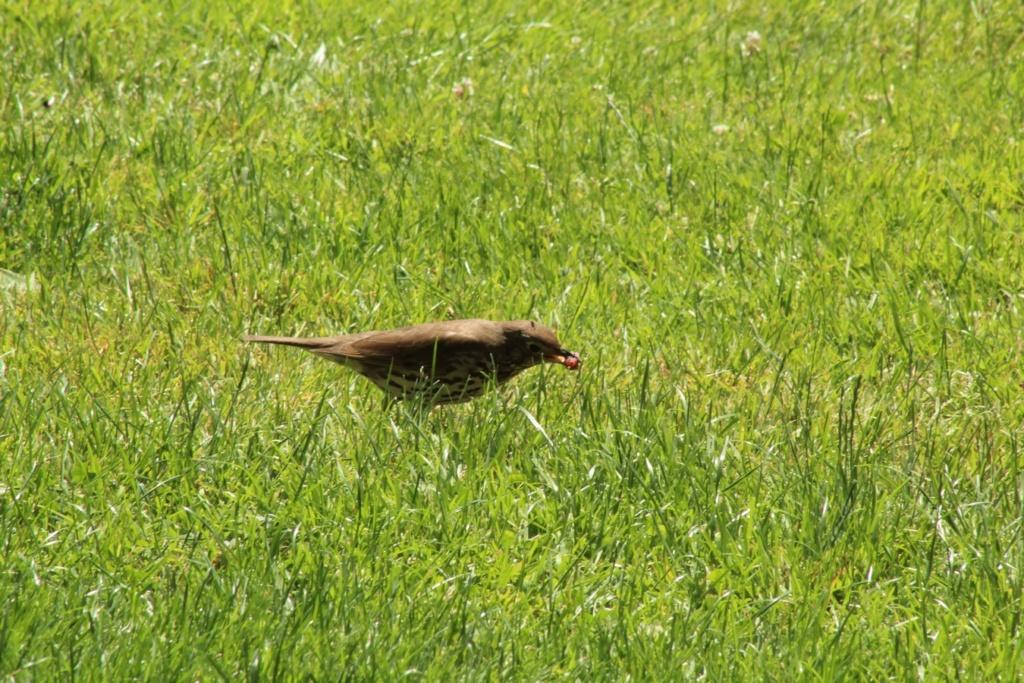 [Ouvert] FIL - Oiseaux. - Page 31 Img_9819