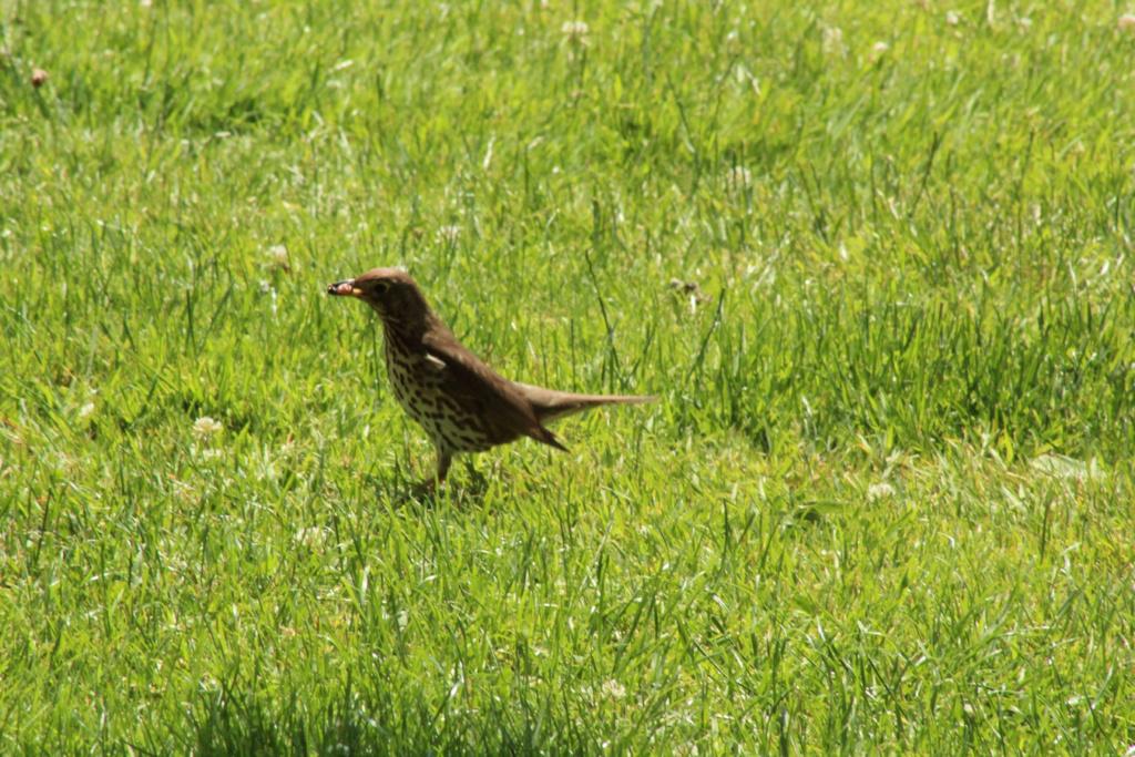 [Ouvert] FIL - Oiseaux. - Page 31 Img_9820