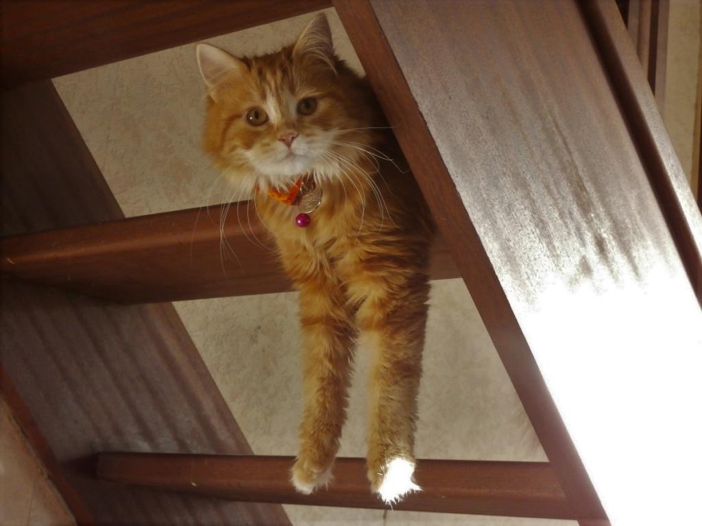 [fil ouvert] Les chats  - Page 8 P1300011