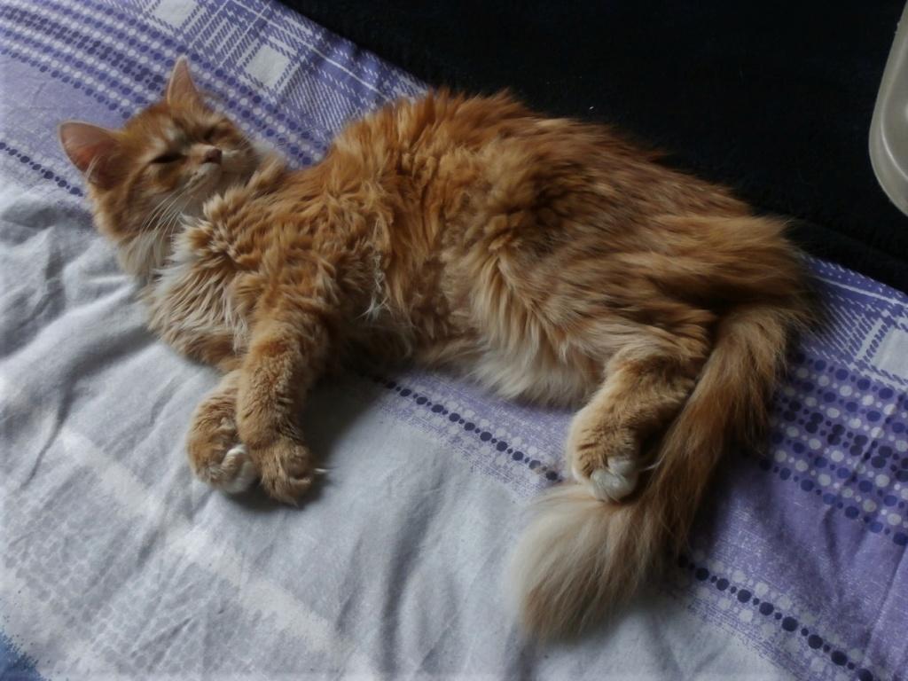 [fil ouvert] Les chats  - Page 9 P2040018