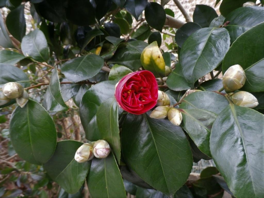 [Fil ouvert] Fleurs et plantes - Page 10 P2050011