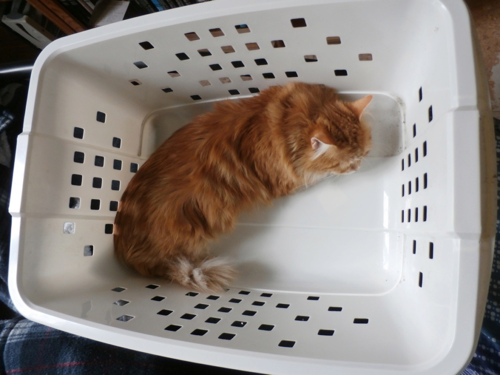 [fil ouvert] Les chats  - Page 9 P4210010