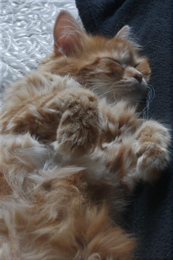 [fil ouvert] Les chats  - Page 10 P8120014