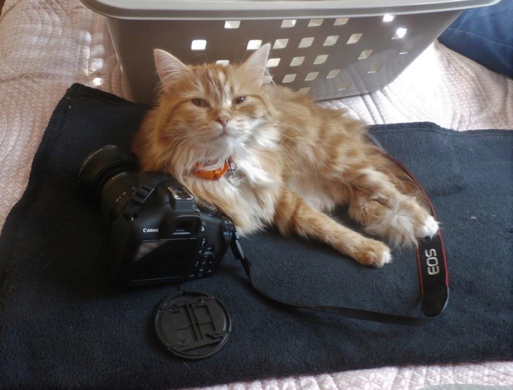 [fil ouvert] Les chats  - Page 10 P9180010