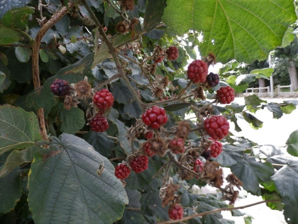 [Fil ouvert] Fruit sur l'arbre - Page 10 P9190017