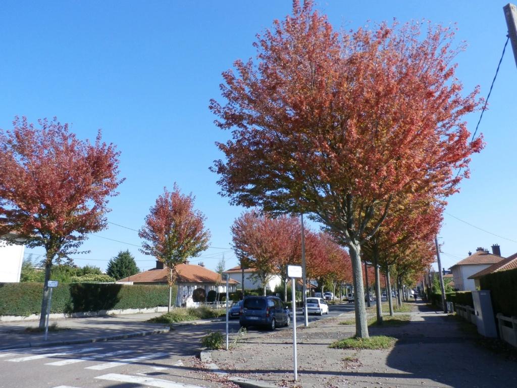 L'automne en ville - Page 2 Pa100018