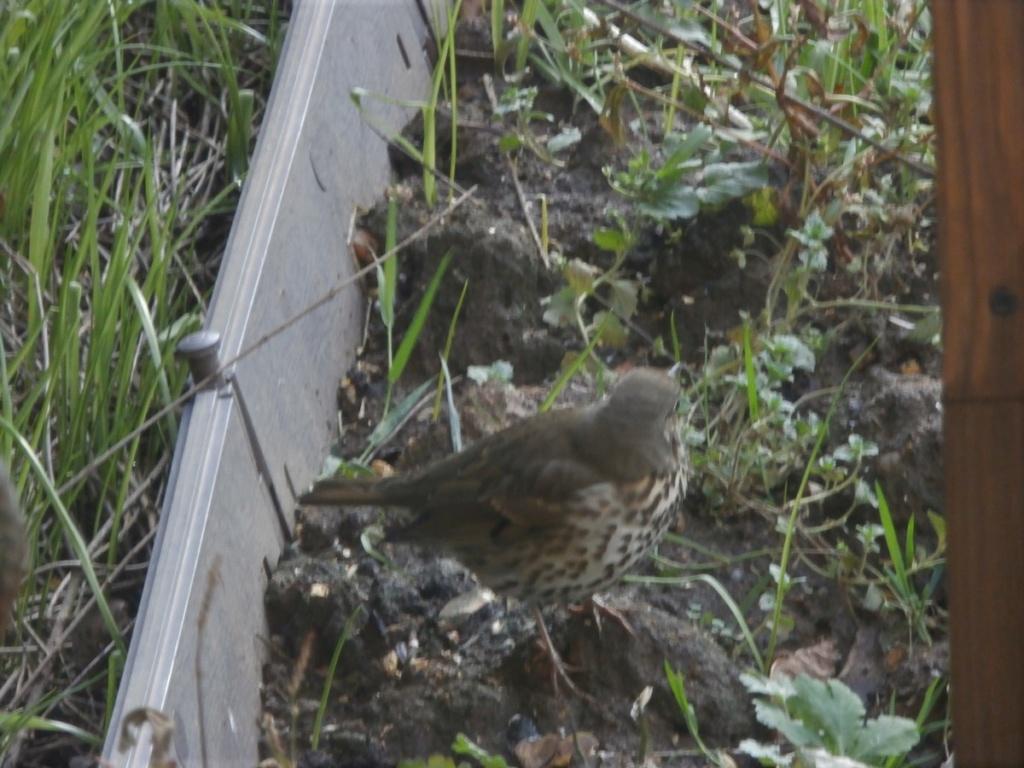 [Ouvert] FIL - Oiseaux. - Page 19 Pc170014