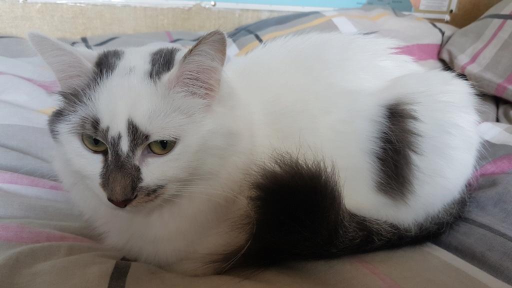 Onyxe, femelle européenne blanche et grise, née le 22 avril 2018 - Page 3 Onyxe-53