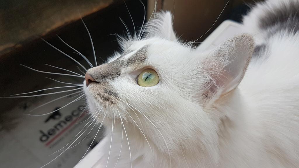 Onyxe, femelle européenne blanche et grise, née le 22 avril 2018 - Page 3 Onyxe-57