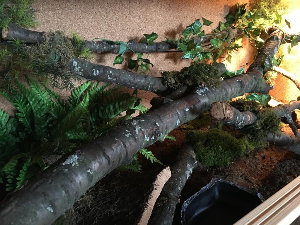 update : Photos terrarium arboricole pour morelia Cheynei 0d901310