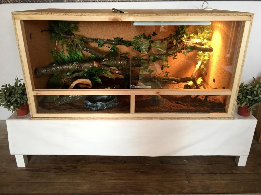 update : Photos terrarium arboricole pour morelia Cheynei 14a9e910