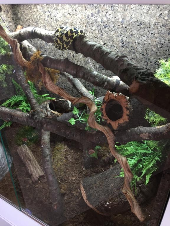 update : Photos terrarium arboricole pour morelia Cheynei 38e57610