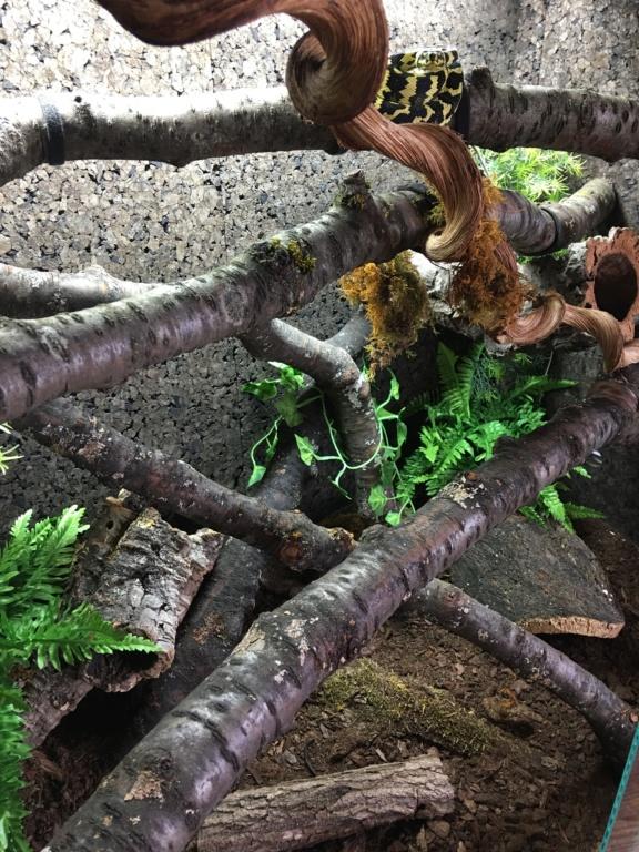 update : Photos terrarium arboricole pour morelia Cheynei 5c8ea310