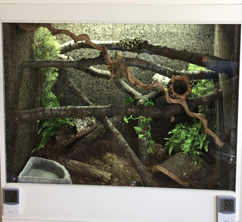 update : Photos terrarium arboricole pour morelia Cheynei Dfae7510