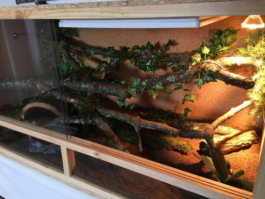 update : Photos terrarium arboricole pour morelia Cheynei F1767710