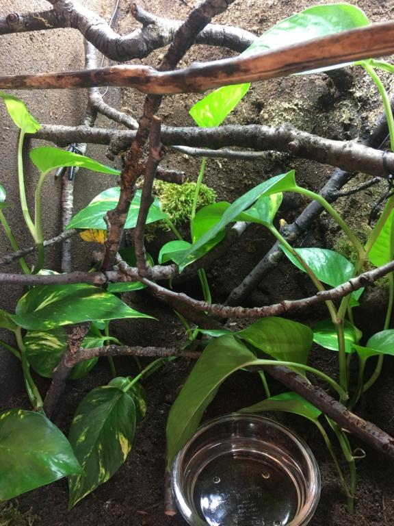Help Refus alimentation morelia viridis juvenile Img_2811