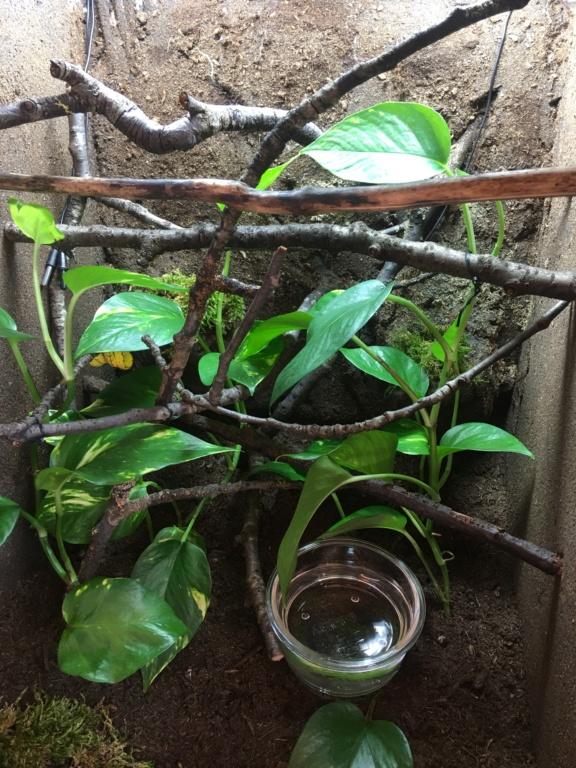 Help Refus alimentation morelia viridis juvenile Img_2912