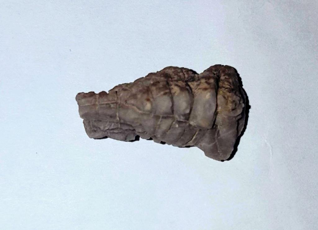 Ayuda identificación Fosil Devonico 20180912