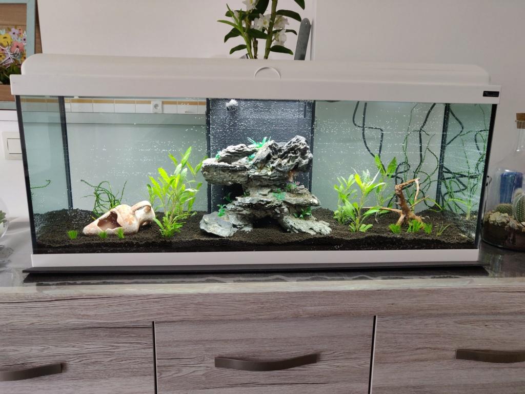 Premier projet aquarium de 115L Aquari10