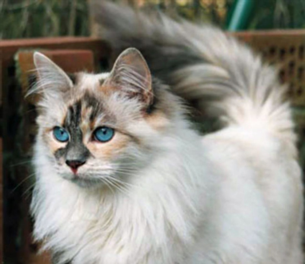 I make your cats - Page 2 Blue-e11