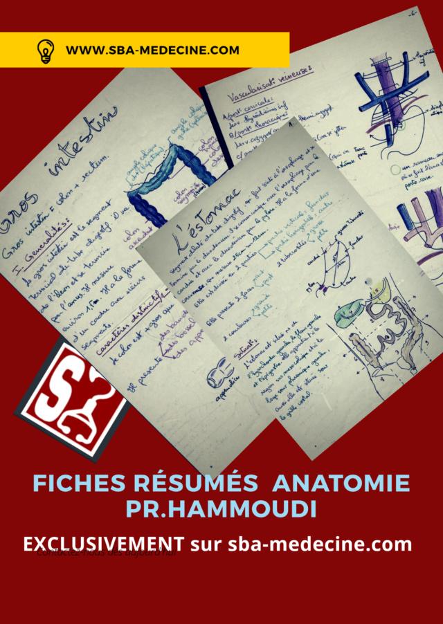 Tag anatomie sur Forum sba-médecine 20200510