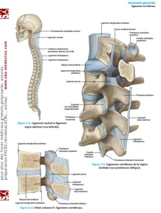 [anatomie]:livre Atlas d'anatomie générale et radiologique dernière édition 2020 pdf gratuit  - Page 12 Atlas_12