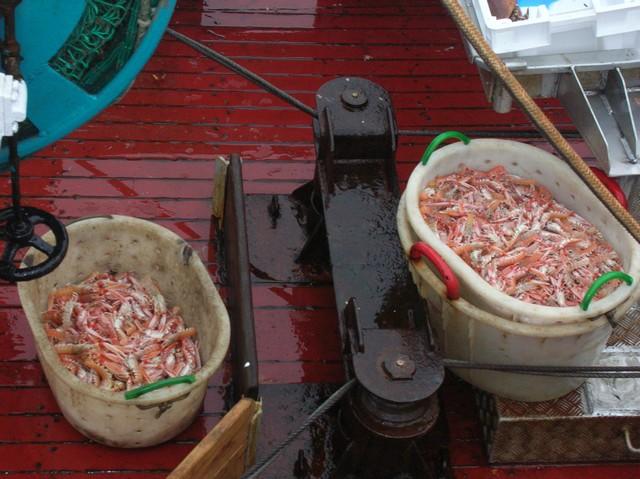 [VIE DES PORTS] Quelques bateaux de pêche (sur nos côtes Françaises) - Page 2 21_05_12